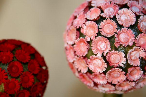 花の木 ピンク 大